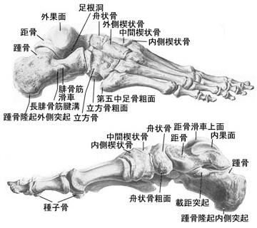 インソール形成イメージ(骨格)